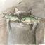 肥猫不吃鱼