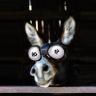 戴眼镜的肥驴