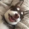 熊平平博客